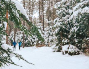 Opeongo Hills Nordic Ski Club cross country skiing madawaska valley brudenell